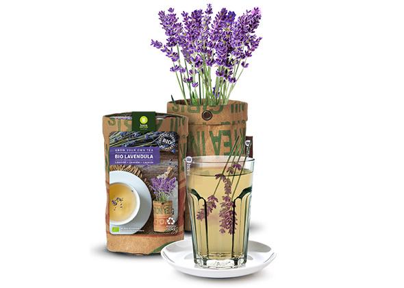 Teagarden - Bio Lavendel
