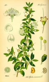 Mirt BIO - myrtus communis ct myrtenyl-acetate