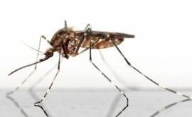 Muggenmelk 100 ml