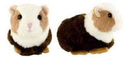 Cavia Baby Piggy