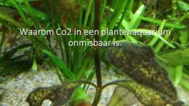 Waarom Co2 in een plantenaquarium onmisbaar is.