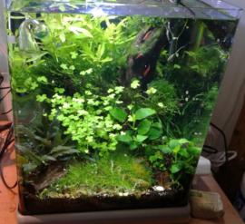 Echte planten in het aquarium, waarom zijn die zo belangrijk?