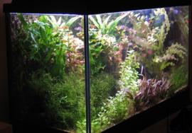 80 cm Aquariumplantenpakket