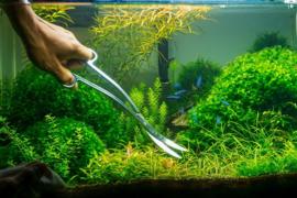 Snoeien in je aquascape, hoe doe je dat?