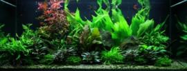 aquariumplantenpakket 16 400 liter