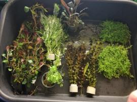 Plantenpakket voor beginner III