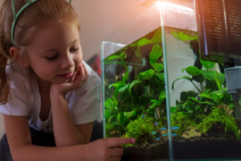 Aquascaping, 5 tips voor beginners