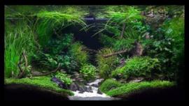 Aquascape planten voor beginners, deze 10 makkelijke planten wil je hebben