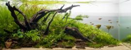 Breng meer diepte in je aquarium met aquascaping