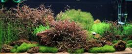 Natuur aquarium pakket