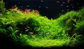 Zo maak je een succes van je aquarium in 10 stappen