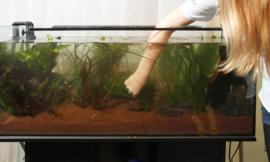 Aquarium onderhouden, wanneer doe je wat