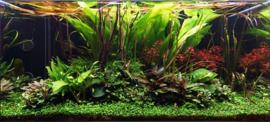 Plantenpakket DHA 11