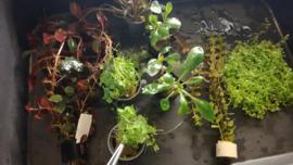 Plantenpakket voor beginner II