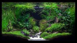 Aquascaping, de 5 beste tips voor een prachtige aquascape
