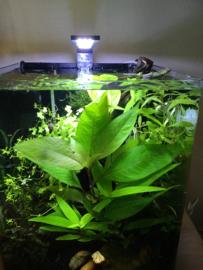 Hoe verzorg ik nou mijn aquariumplanten?