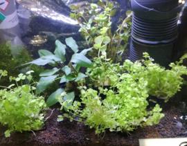 Plantenpakket voor beginner I