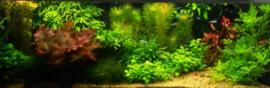 120 cm Aquariumplantenpakket