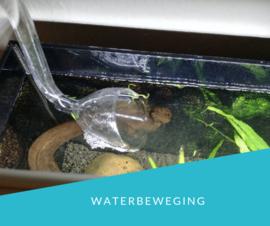 Watercirculatie en stroming in het aquarium, hoe belangrijk is dat eigenlijk?