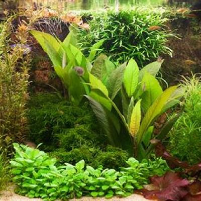 Aquariumplanten alle informatie en mogelijke oplossingen