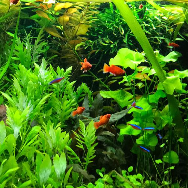 CO2 is onmisbaar in het aquarium!