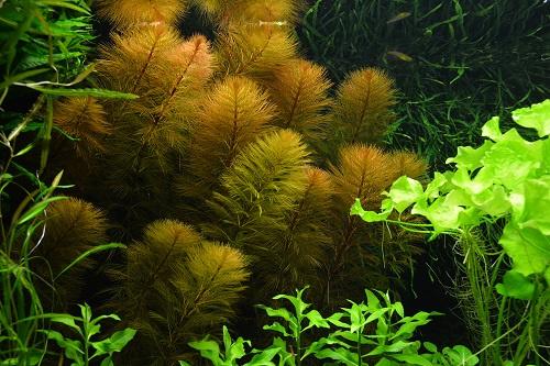 Wat bijna niemand weet over CO2 in het aquarium