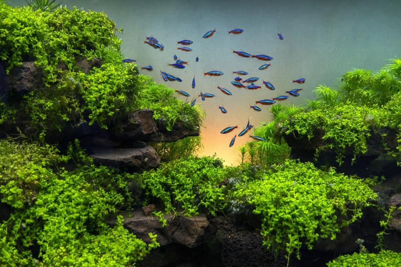 Hoe vaak maak jij je aquarium filter schoon
