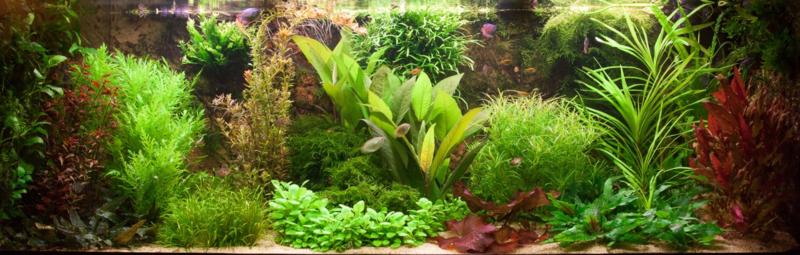 Hoe je in 90 dagen een succes maakt van jouw aquarium