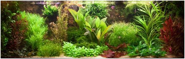 Help, ik heb een aquarium