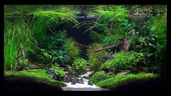 Aquarium Ideeen Inrichting.Aquascaping De 5 Beste Tips Voor Een Prachtige Aquascape