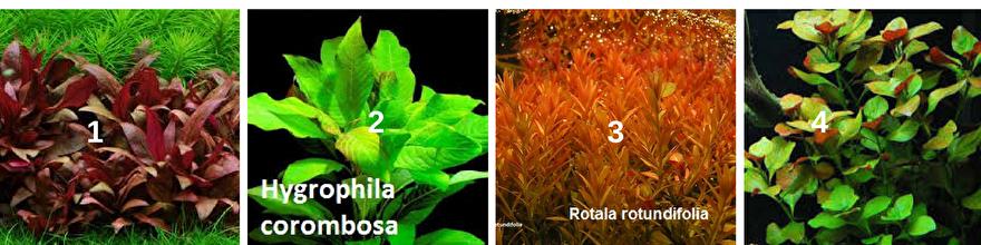 Aquariumbemesting voor gezonde planten