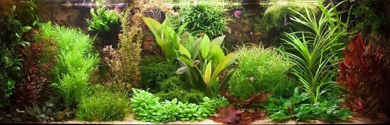 aquariumplanten kopen