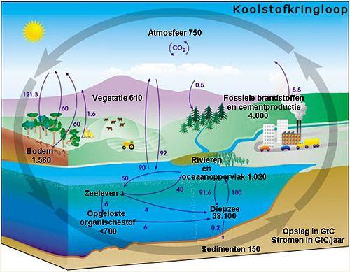 Waarom CO2 zo belangrijk is in jouw aquarium