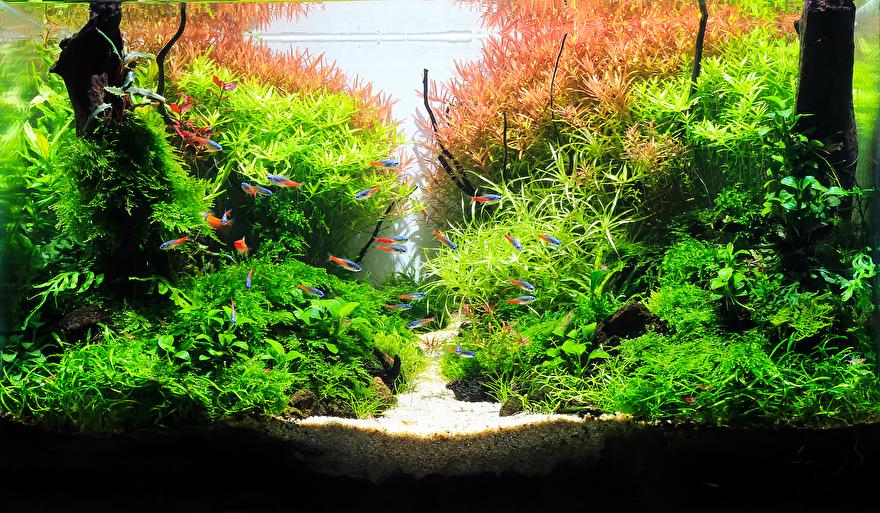 Aquascaping, de 5 beste tips voor een prachtige aquascape ...