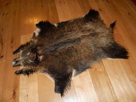 Lederen wild zwijn met hoofd