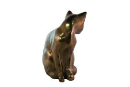 Messing kat