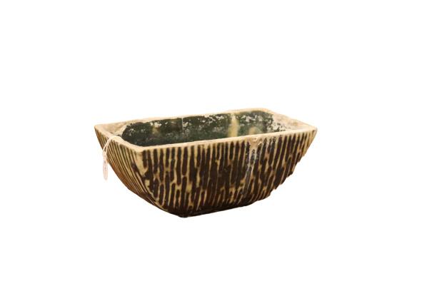 Berkenbast cactuspot