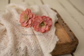 Echeveria Elegans (roze)