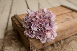 Grote hortensia bol