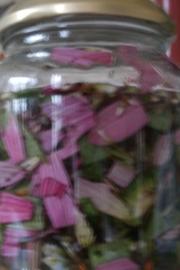 Echinacea - 50 ml