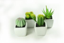 Vetplantjes - set van 4 stuks