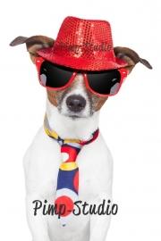 Strijkapplicatie coole hond 1