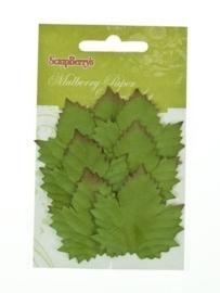 ScrapBerry's Set Of Leaves 7 pcs Cedar (SCB300602)