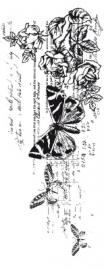 Kaisercraft clear stamp botanical CS795