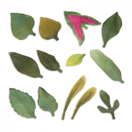 Sizzix Thinlits Die Set 13PK - Leaves, Garden 658413