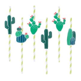 Rietjes Cactus
