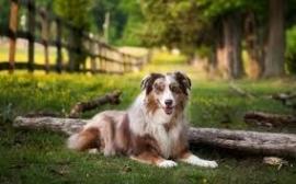 Natuurlijke hondensnacks