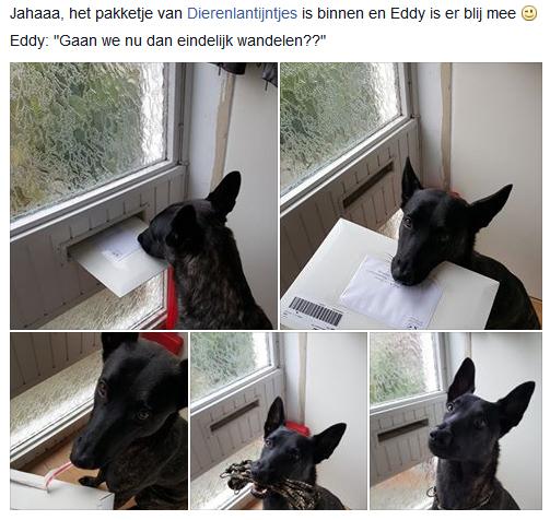 Eddy-blij-met-gewone-lijn-en-halsband.jpg