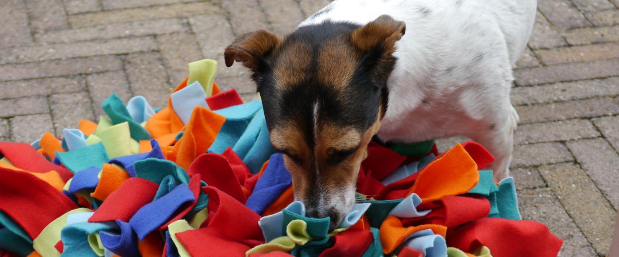 Hondenspeelgoed | Snuffelmat