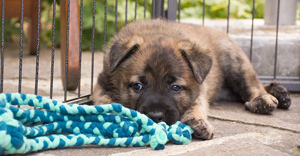 Hondenspeelgoed | fleecespeeltjes
